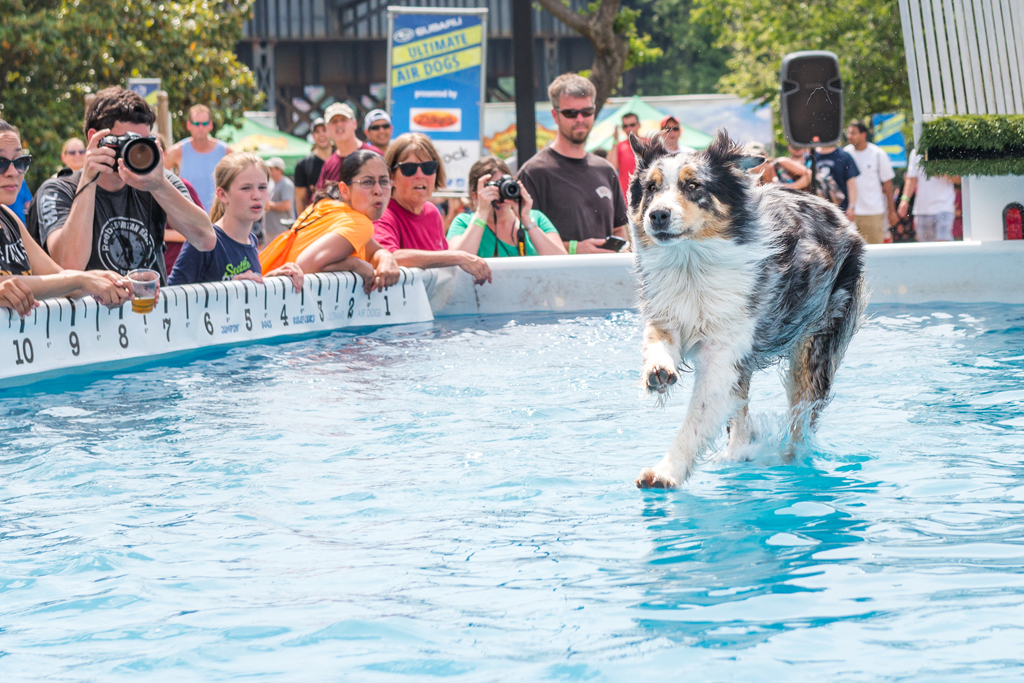 Ultimate Air Dogs: Becky Huddleston (Not eligible for prize money)
