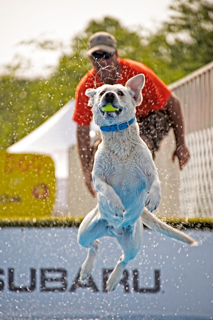 Ultimate Air Dogs: Jimmy Giles ($50)